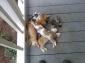 Catinators-63594