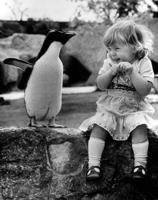 Oh-silly-penguin-you-re-so-cut-28182